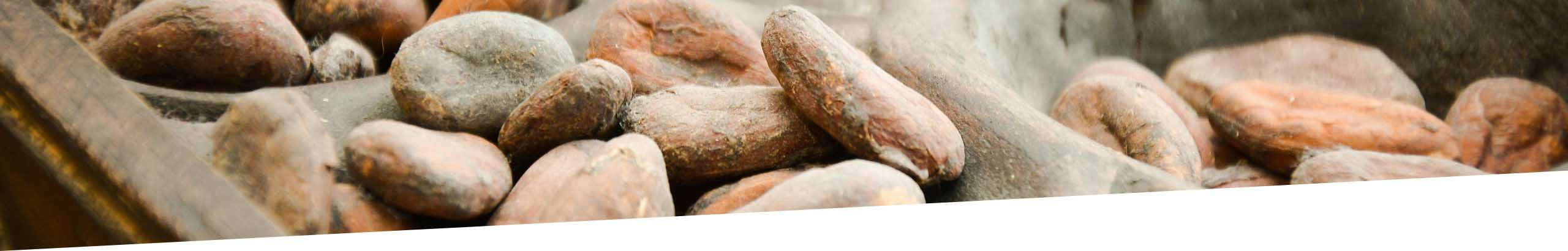cacao, Chocolatier, artisan, Mérimée, Lisieux, Pont l'Évêque, pays d'auge, Calvados, Normandie