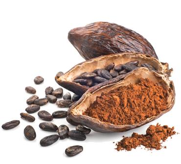 la route du cacao, visites, démonstration, fabrication, cacao, chocolat, lisieux, calvados, normandie